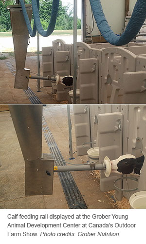 calf feeding rail